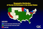 Geographic Distribution of Human Ehrlichioses in t