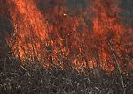 Prairie burn to stimulate new growth and recycle n