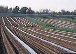 Contour farming, terraces and rye grass field stri