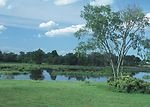 Scenic open water wetland with grass and tree in f