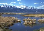 Washoe Lake wetlands area, Slide Mountain in backg