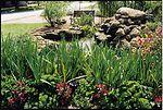 Backyard pond with wetland plants in Palm Beach, F