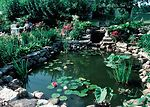 A pond is the focal point of a backyard conservati