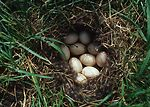 Nest located on land where NRCS has provided techn