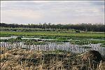 Restored wetland on a farm in Van Buren County off