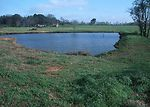Wetland area restored and buffer protection from g