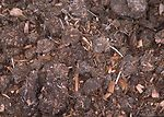 Compost containing turkey manure and wood chips fr