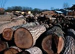 Harvested logs in northeast Iowa.