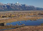 This constructed wetland near Jackson, Wyoming wil