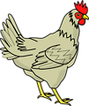 Illustration of a chicken