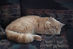 My persian cat sleeping