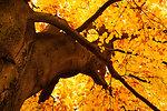 Yellow tree in autumn
