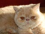 My persian rascal
