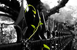 Green plant on the iron fence