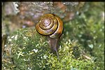 Closeup shot of snail.
