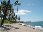 Beach, surf, and palm trees.