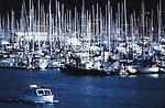 A sea of masts at a Seattle marina.