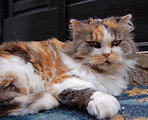 Unusual cat