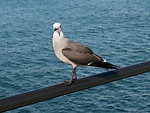 Seagull perched on pier railing