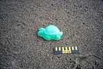 Point Reyes Great Beach south end.  Marine debris - a small plastic turtle which  looks cute but is part of a growing ocean-wide problem of plastic debris in the  ocean.