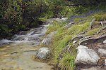 Stream in high tatras