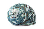 Blue sea shell