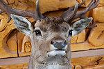 Stuffed deer head