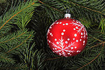 Red bauble on tree branches