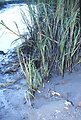 Life on the mudflats and in the marsh grass of Helena Island