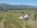 Removing Fence at Lee Metcalf National Wildife Refuge