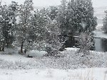 Snowy November day at National Bison Range