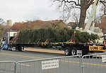 Capitol Christmas Tree 2013