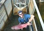 Chinook salmon at Yukon Delta NWR