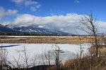 Frozen Wetlands