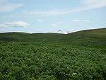 Izembek Landscape