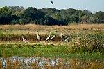 Sandhill cranes at Stone Lakes NWR