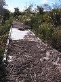 Hurricane Sandy damaged Cape May National Wildlife Refuge (NJ)