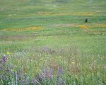Native Prairie Colors