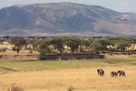 Threats to elephant survival