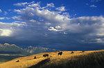 National Bison Range, MT
