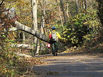 Sawyer begins day of tree clearing (NY)