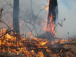 Burning for People and Wildlife