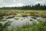 Kenai Wetlands