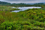 Beaver Pond at Camp 71