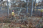 Tree work at Long Island National Wildlife Refuge Complex Headquarters (NY)