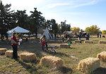 Refuge Round-up 2010