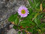 wilderness flower