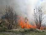 Controlled Burn Maintains Grassland