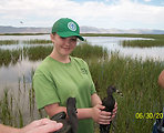 YCC Participant Holds a White-faced Ibis