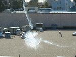 Bird Collision with Window